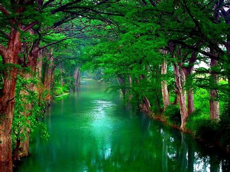 Nature Trees Wallpaper 2560x1600 28782 : Wallpapers13